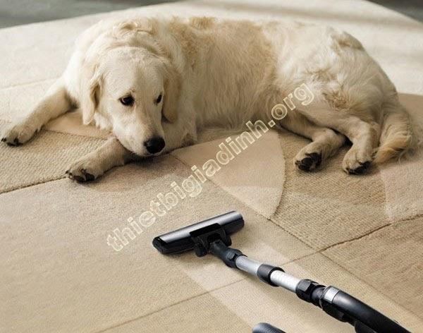 Mua máy hút lông chó nào để sử dụng?