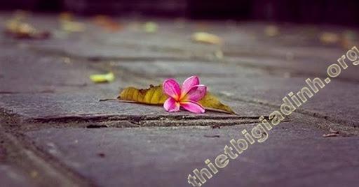 Ý nghĩa hoa rơi cửa phật